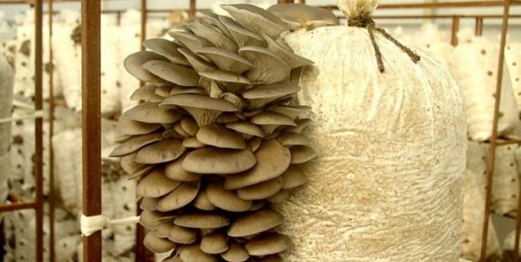 проект мини фермы грибов: